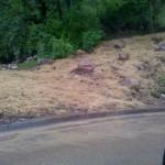 Improper landscaping erosion control.