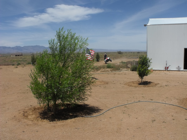 Raking lawns in the Southwest desert