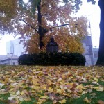 Leaf cleanup hampered by Occupy Wall Street